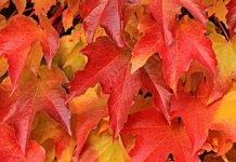 dneven-horoskop-za-dnes-23-10-21