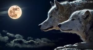 horoskop-grizha-za-zdraveto-ianuari