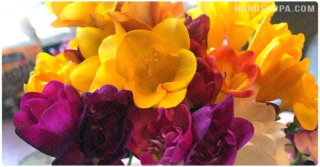 proletni-cvetia-horoskop